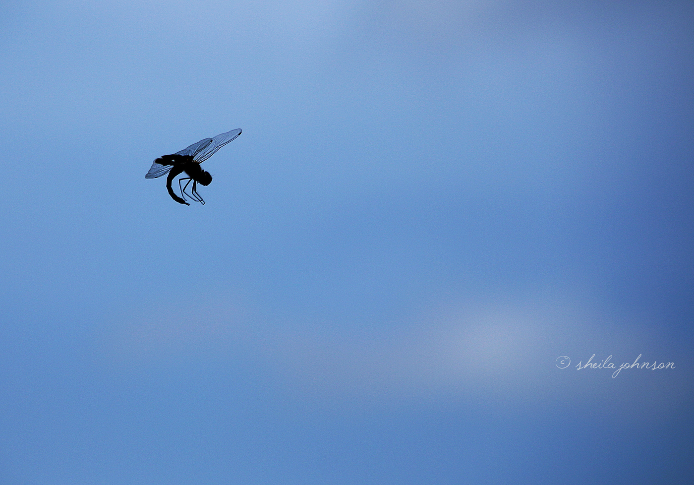 It's Hard To See, When They're Flying Full-Speed Ahead, But Dragonflies Sure Do Some Amazing Mid-Air Acrobatics.