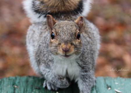 The squirrels at Mariner Point Park, Joppa, Maryland, are shameless, and many park patrons bring bags of nuts for the sole purpose of feeding these little cuties.