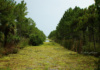 Dupuis Management Area Is 21,875-Acre Multi-Use Natural Area Located In Northwestern Palm Beach And Southwestern Martin Counties In South Florida. South Florida Water Management District Has Been Restoring The Area To Its Natural State Since Acquiring The Land In 1986.