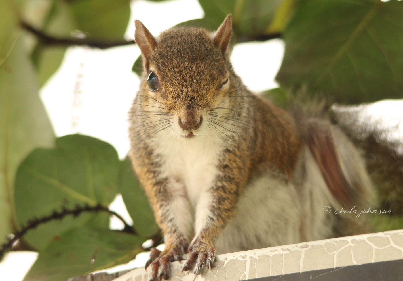 I Think He Likes Me, This Flirty Little Florida Squirrel, Winking At Me Like That!