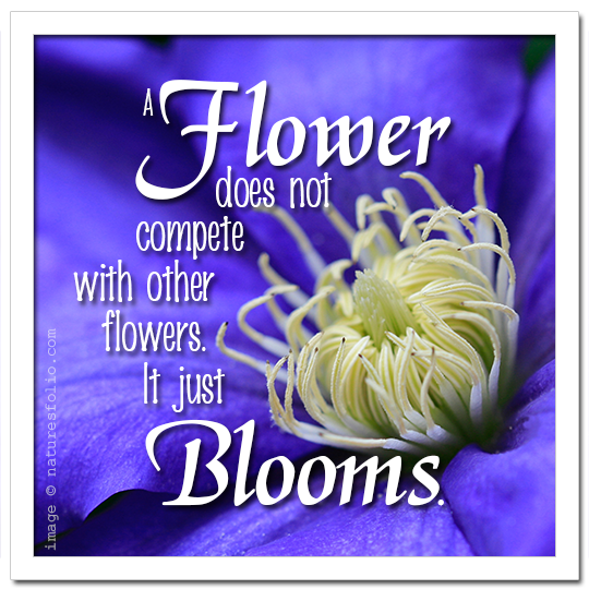 Flower Does Not Compete . . .