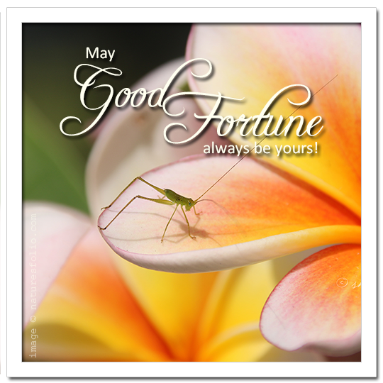May Good Fortune Always be Yours!