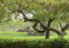 We Love Zoo Miami For So Many Reasons. This Twisty Tree That Appears To Have Heart-Shaped Branches When Viewed At Just The Right Angle Is A Little Bonus.