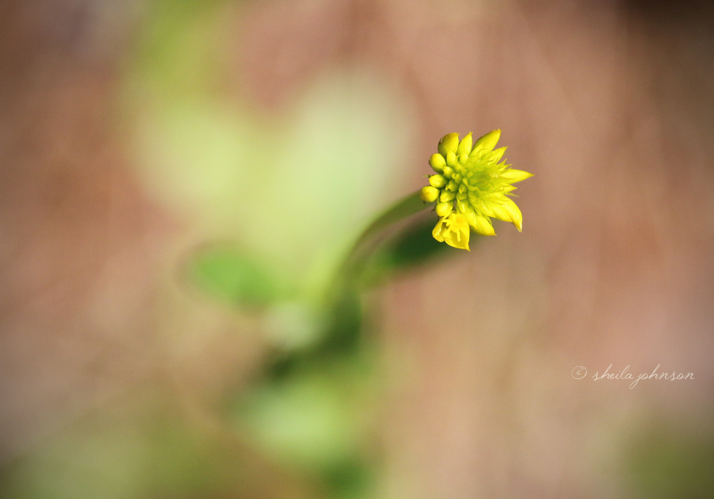 Our Focus Was On The Yellow Wildflower. We Thought It Lovely That We Captured Heart-Shaped Bokeh.