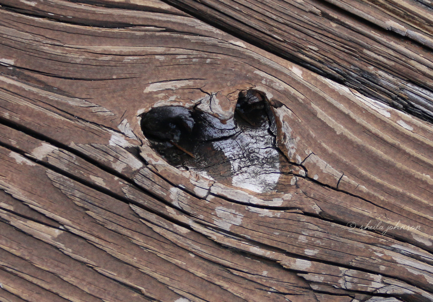 This Wood Has Worn Away, Bit By Bit, As Though Worn By The Love Of All Those Visiting The St. Lucie River At Kiplinger Preserve In Stuart, Martin County, Florida.