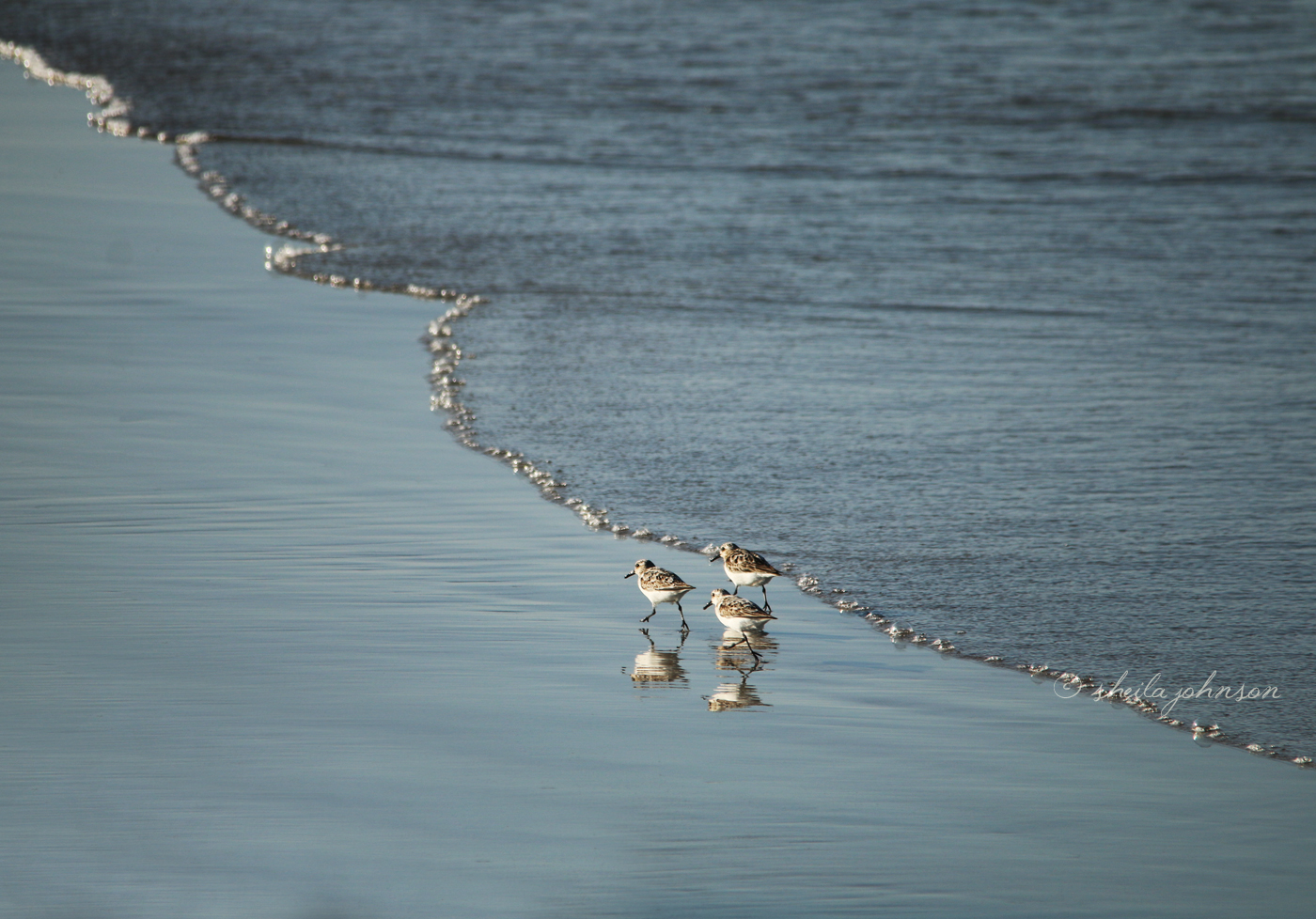 'sand Between Your Toes Takes Away Your Woes!' Is Surely The Motto Of These Three Sandpipers.