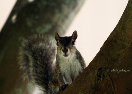 'You has treats?' this Florida squirrel seems to be asking, curiously.