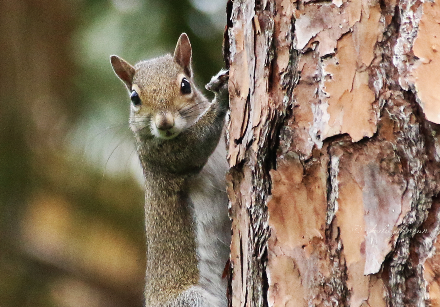 We Say 'squirrel'! They Say 'has Nuts?!' Such Cute Little Beggars, These Squirrelly Squirrels Are!