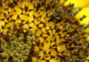 If You Look Closely Enough, You Can See That The Giant That Is A Sunflower Is Made Up Of Hundreds (Maybe Thousands) Of Tiny Little Flower-Like Parts.