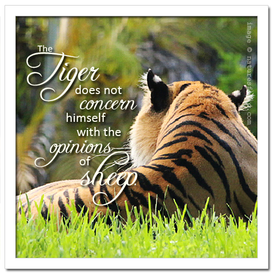 The Tiger Does Not . . .
